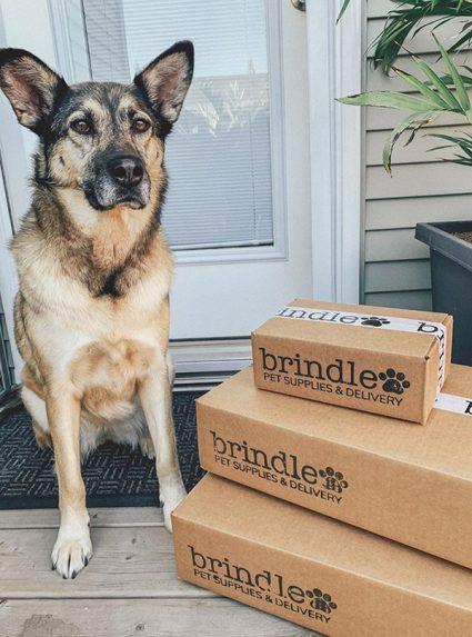 about-brindle-dog-photo-three-web-small